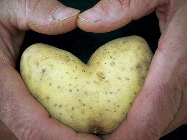 Unsere Kartoffelsorten im Uberblick